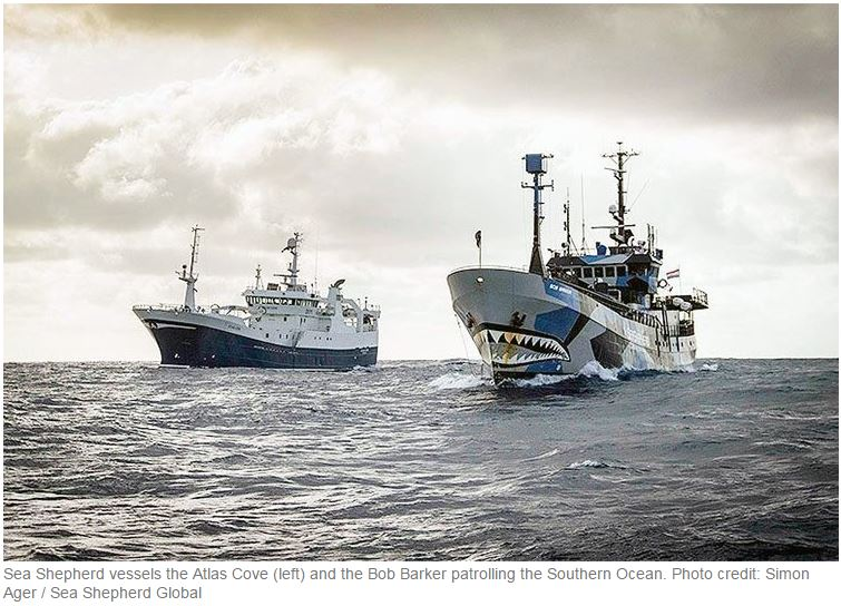 illegal chilean sea bass fishing could be coming to an end