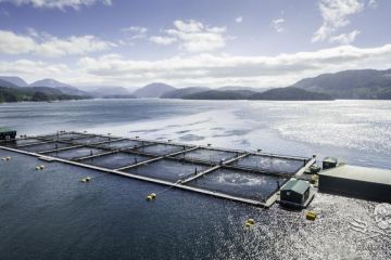 160730-SA-Drone-studies-of-Venture-Point-fish-farm-0037-1200.jpg